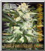 Exotic - Auto Monster Mash - Feminised 5 Seeds